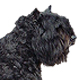 Bouvier des Flandres Photo