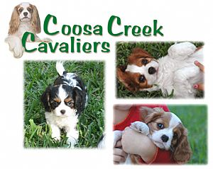 Cavalier King Charles Spaniels of Coosa Creek