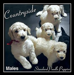 Dog Breeders, Puppies for Sale, Dog Breeds Information